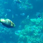 fish and corrals in the red sea