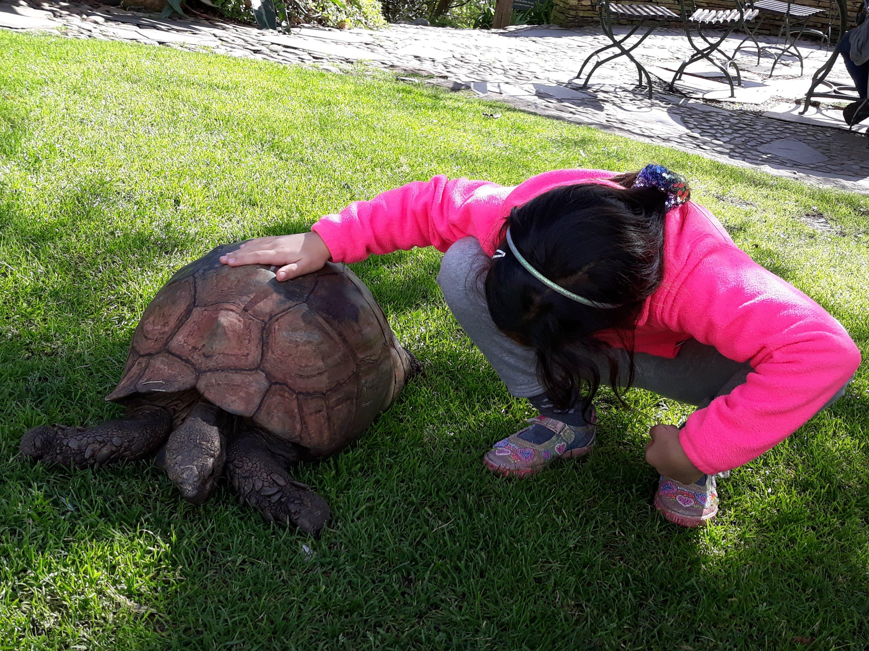 Child petting tortoise