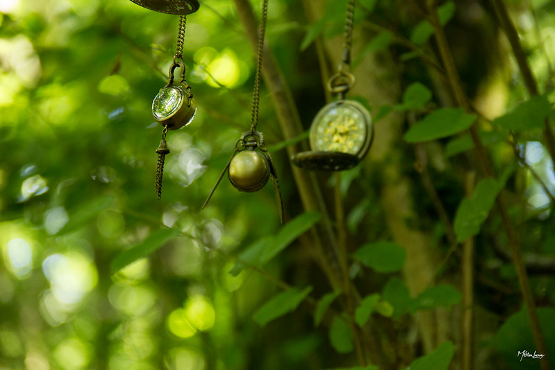 Pocket watches hanging from trees